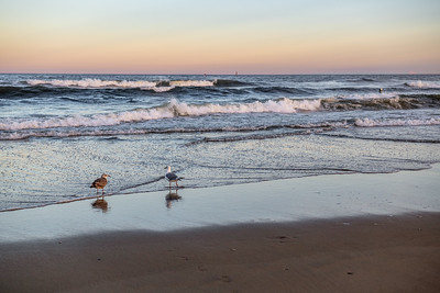 Two Seagulls at Twilight