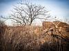 Bare Tree Snake Hill