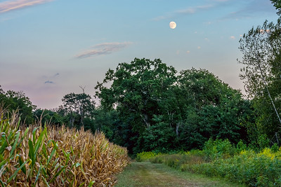 Moonrise Over Meadow