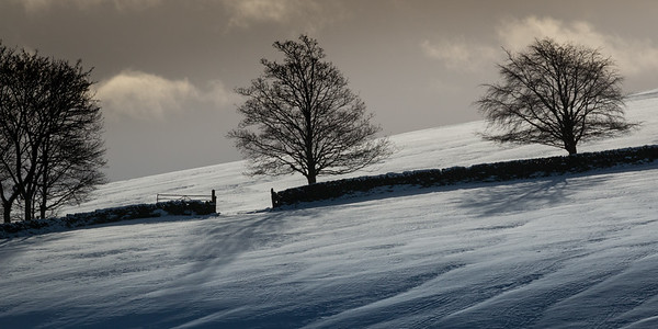 Three bare trees cast their silhouette shadows on the winter snow in the Scottish Borders