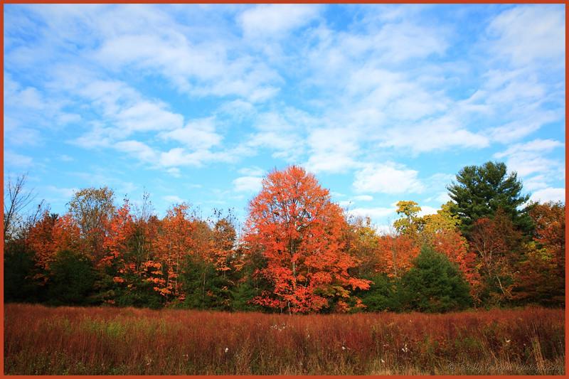 Rosendale New york fall of 2013