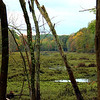 swamp in upstate ny sept 2011