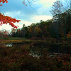 Another shot of the swamp on NYC property Ashokan NY, Ulster County. 10-15-2011