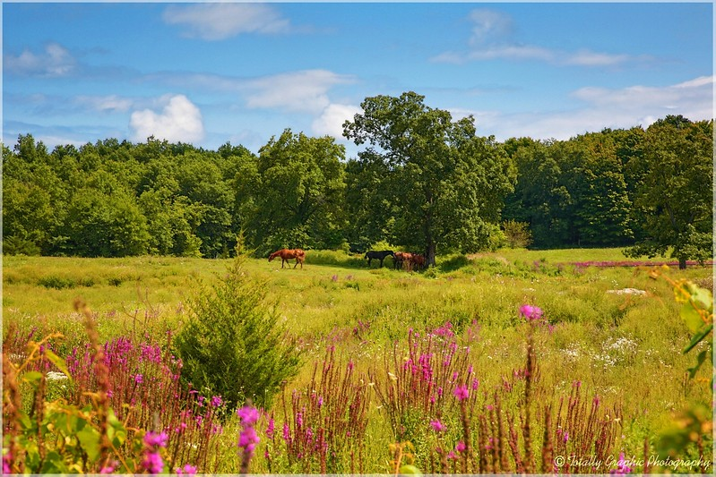 A meadow in New Paltz NY. The light caught my eye.