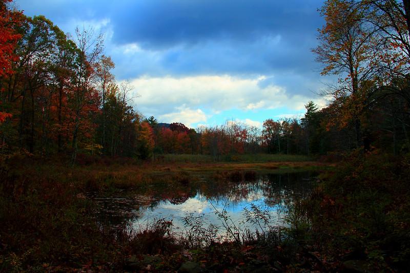 A swamp on NYC property Ashokan reservoir. 10-15-2011