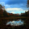 A swamp on NYC property Ashokan reservoir. 10-15-2011