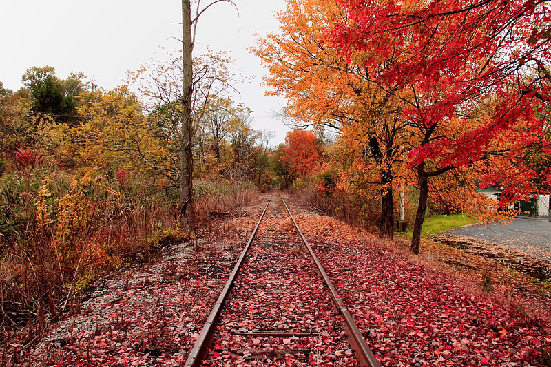 Abandoned railroad tracks Kingston NY, fall 2011, best view @ XL.