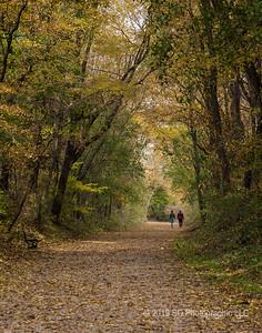 Autumn Leaves on the Pumpkinvine