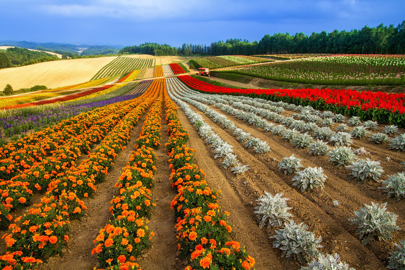 Endless Fields of Color