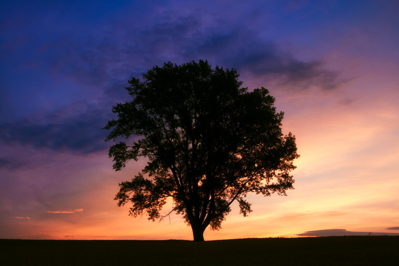 I Think Therefore I Am<br /> The Philosopher's Tree in Biei Hokkaido