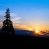 Christmas Tree Sunset