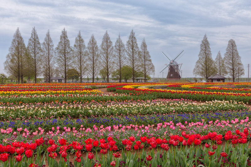 Finding Netherlands