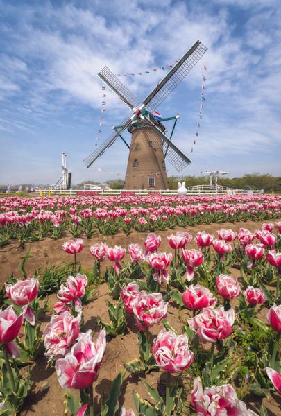 Netherlands in Japan