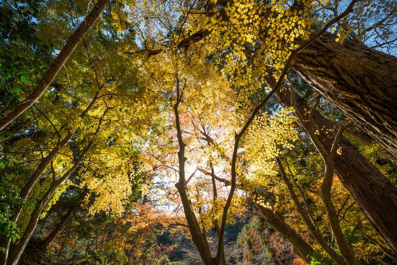 A Little Bit of Autumn