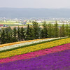 Furano's Field of Dreams