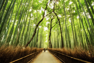 The Mystical Bamboo Forest