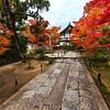 Kyoto Koyo
