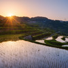 The Rice Field Glow