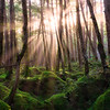 Sunrise at the Mononoke Forest