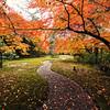 A Journey Through Autumn