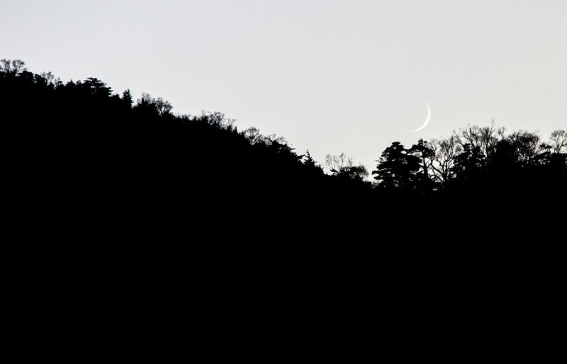 The Moon Cradle