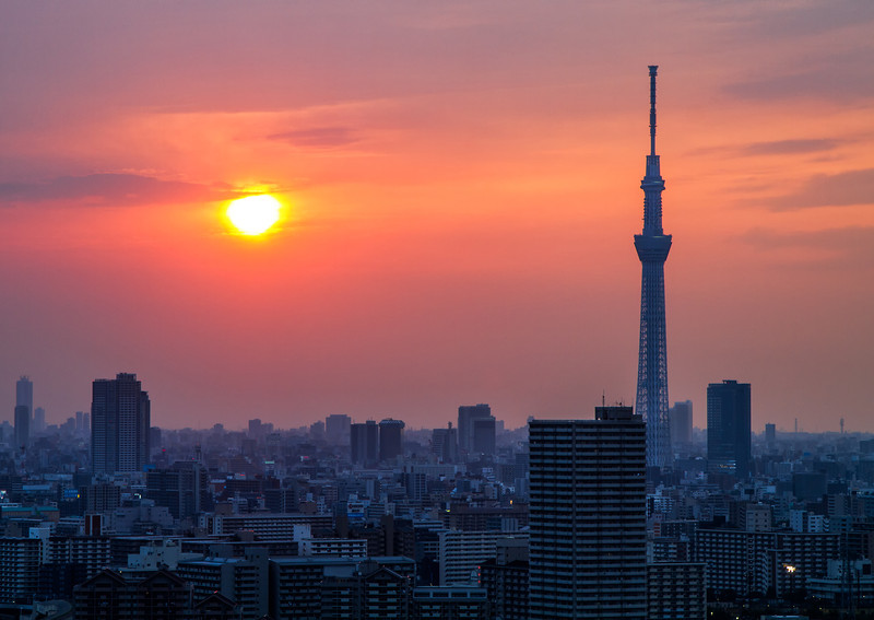 Sunset Sky Tree