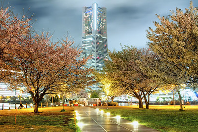 Cherry Blossoms with the Landmark Tower