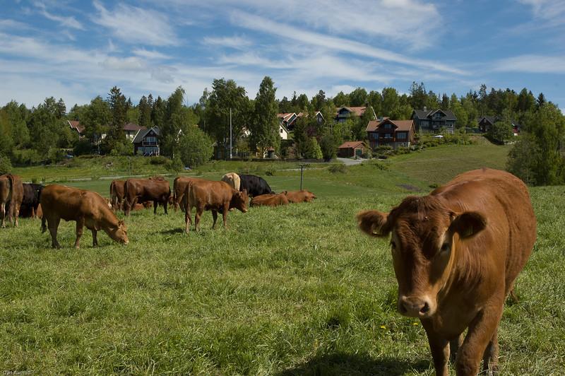 Aktivt landbruk i Ås