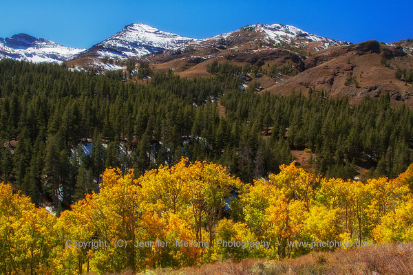 Fall Colors after First Snow