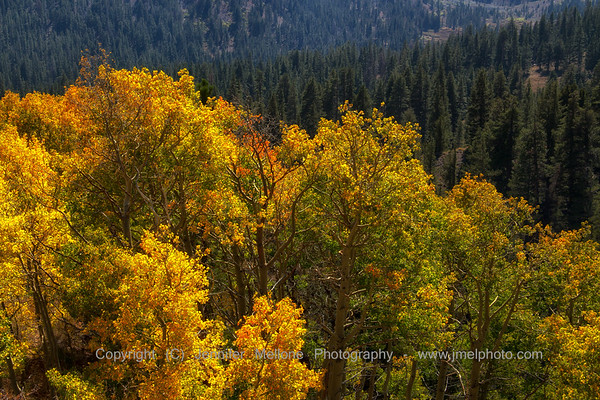 Fall Trunks in the Eastern Sierras
