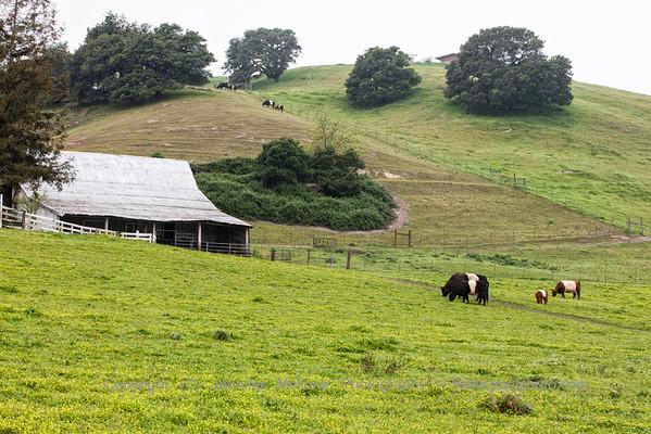 Stewart Ranch Cloudy Morning
