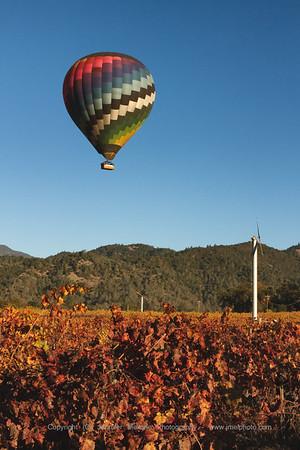 Balloon over Fall Vineyard - Vertical