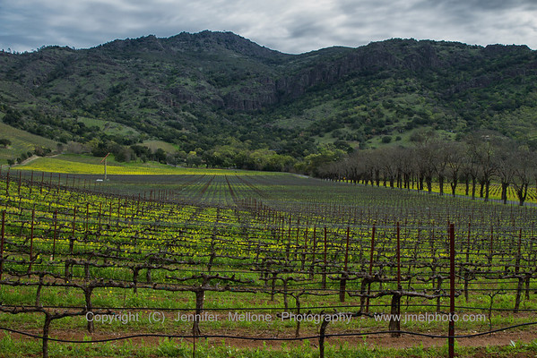Mustard Vines and Rocky Hills