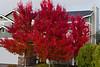 Fall color at Greenhorn Creek. December 2010.