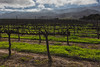 Santa Lucia Highlands in Monterey County