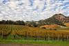 Autumn Late Afternoon Clouds over the Vineyard