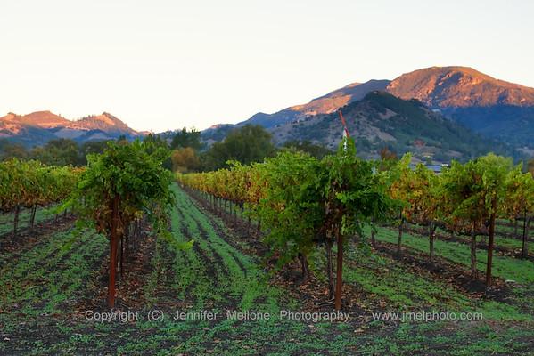 Sunrise Lighting up the Mountains near Vineyards