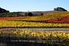 Patchwork Quilt of Vineyard Colors