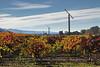 Windmills and Fall Colors in Napa Vineyard