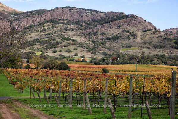 A Rocky Hill and Colored Vines
