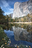 Autumn Morning El Capitain Reflection