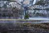 Pre-Sunrise Ground Fog Meadow Yosemite Lower Fall - Color