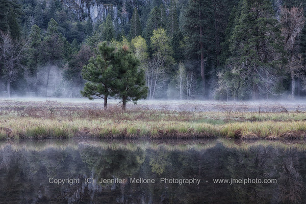 Pre-Sunrise Ground Fog Tree Pair and Meadow Reflections