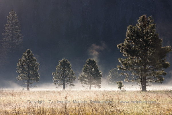 Sunrise Shines on Trees and Golden Meadow Ground Fog