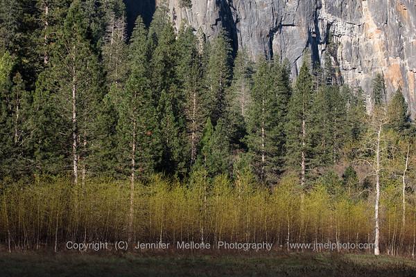 Spring Trees at El Capitan Meadow