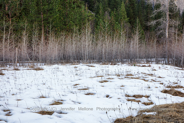 Melting Snow in Meadow with Poplars - Color