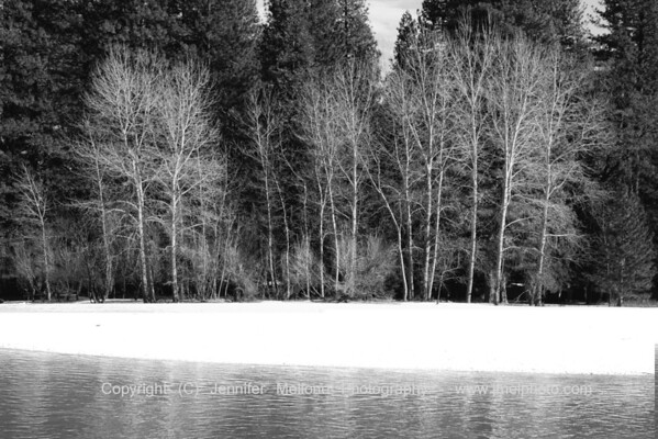 Winter Trees on Merced River - Black and White