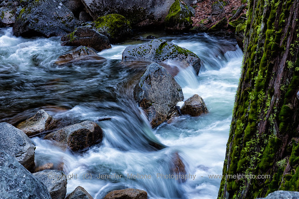 River Rush and Mossy Tree