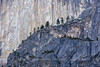 Treetop Slope on Half Dome's Side - Color