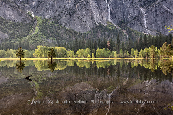 Sunlit Trees, Granite, and Cascade Reflections in Flooded Meadow